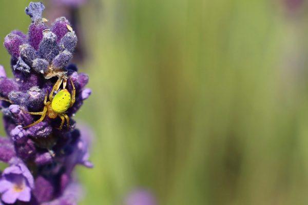 Spinnen lösen bei vielen Menschen ein Ekelgefühl aus. Wie fängt man eine Spinne?