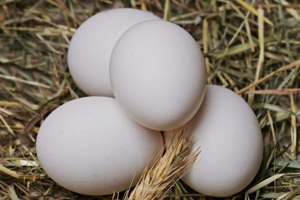 Wie lange muss ich Eier kochen, damit sie weich, wachsweich oder hart werden?