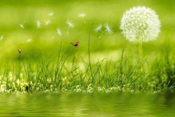 Wie schnell Winde sind, sehen wir täglich in der Natur, wenn Samen, Pollen oder Blätter verweht werden.
